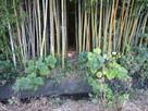 竹藪の中への入口…