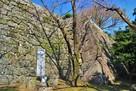 本丸石垣(南東側)と川上不白の顕彰碑…