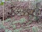 二の丸 杉の木井戸裏側石垣…