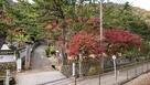 駅裏登城口の紅葉…