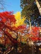 新城付近の紅葉…