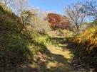 四季と紅葉をセットに訪れて!…