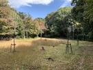 さくらの園
