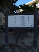 長島の大松案内板…