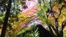 石垣を覆う紅葉…