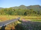 遠景と秋桜