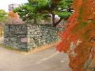 モミジと黒門跡枡形石垣(2)…