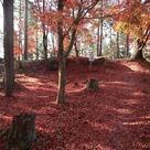 出丸の赤い絨毯…