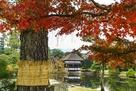 秋の衆楽園