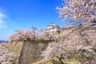 津山城(春)