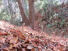 藪の中の堀切