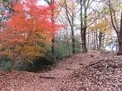 南丸の紅葉