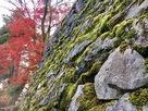 太鼓櫓の苔むす石垣と紅葉…