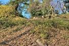 本丸土塁(東側)と石積…
