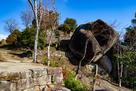 馬洗岩と天守台