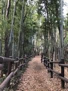 土塁と竹林