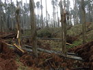 堀と倒木Ⅰ
