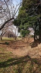 堀と土塁 (折)