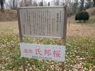氏邦桜の案内板…