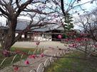 弘道館と梅の花…