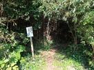 入り口の竹藪