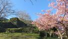 大手石垣に桜