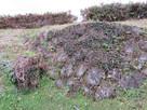 二の丸の下の石垣