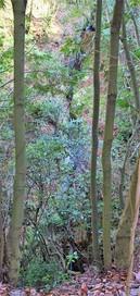 小川に落ちる一条の滝…
