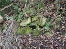 本丸下の石垣跡…