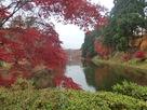 紅葉の水堀