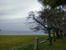 豊公園から琵琶湖を臨む