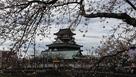 桜と清洲城