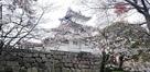 桜と丑寅櫓