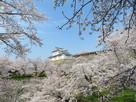 桜に囲まれた備中櫓…