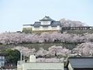 吉井川から、さくらまつりの備中櫓…