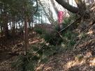 登城路と真田丸の幟旗…