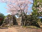 ソメイヨシノと、本丸跡突出部の石垣…