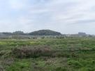 太田道灌陣所付近から見た小机城遠景