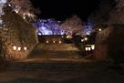 夜桜と表中門跡…