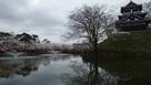 高田城と桜まつり…