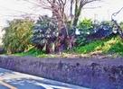 太田城水攻め堤防跡…