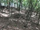 林小城畝状竪堀…