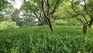 初夏の二ノ丸