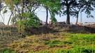 千布城 館林の土塁…