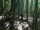 竹藪化城跡