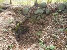 杉の木井戸