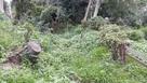 殿山公園に遺っている竪堀…