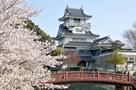 小山城(桜)