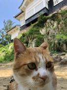 猫城主さんじゅーろー…