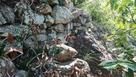 猿啄城 石垣